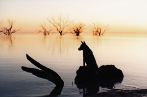 Lucy at menindee1