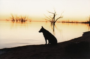 Lucy at menindee2