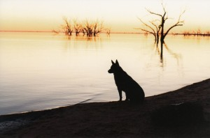 Lucy at menindee4